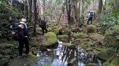 #trekking #friends #nature #outdoor #chapada #diamantina #salvador #beauty #amigos #paz #trilha #downtoearth #simple #important #healthy