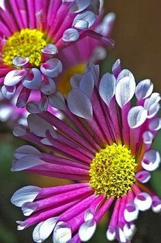 BRILLANCE FLOWERS