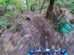 Which tree shall I hit... Can't decide they are all a Lil blurry! #iride #mtb #ride #speed #forrest #ferns #tree #nature #instalike #instadaily #fun #picoftheday #gopro #mongoose #me #downhill #mountainbike #like4like #follow4follow #blur #fast #apollobay #australia by laboonthewhale http://ift.tt/1LQi8GE