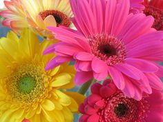Rainbow Daisies | And you would forbid your kids from watching too much TV show, how?
