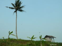 paddy field images, paddy field photo
