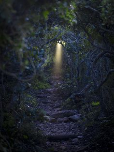 magical trail