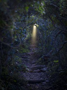 magical trail