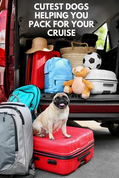In the spirit of canine wanderlust, here are some of the cutest dogs helping you pack for your cruise. New York Vacation, New York Travel, Vacation Travel, Affordable Cruises, Best Vacations, Summer Vacations, Royal Cruise, Travel Organization, Organizing