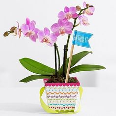 The Birthday Bunch Same Day Flowers Delivery Online Gifts Present Ideas Hy