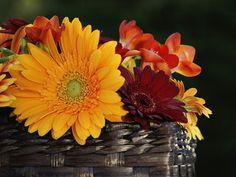 Wedding_robinson_flowers