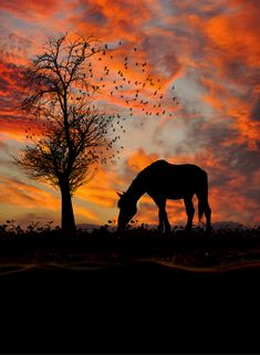 Horse in the pasture by a tree that was just a second ago full of birds, at sunset