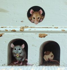 3 x miniature mice/ mouse hole decals unique by StickersfromLola