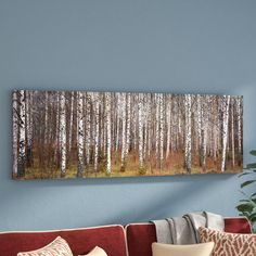 Birch Trees in a Forest Framed Photo Graphic Print on Canvas