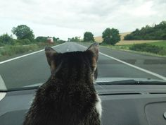 Why cats like driving cars - TailOnline