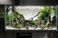 Beautiful Driftwood Roots For Fish Tank Background. Purchase natural driftwood for your aquarium here: www.driftwoodboss.com