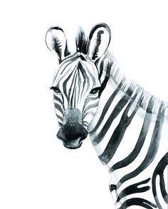 Zebra Watercolour Wall Art Print by JackofallDesigns83 on Etsy