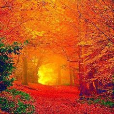 """When autumn leaves start to change, color fully and fall . that sweetest time, before the perfect cycle of seasons begins once more . """"Fear no more the heat of the sun, nor the furious winter's rages, thou the worldly task has done . Beautiful World, Beautiful Places, Beautiful Pictures, Beautiful Scenery, Simply Beautiful, Amazing Places, Autumn Scenes, All Nature, Autumn Nature"""