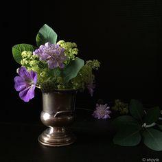 dramatic flowers ehpyle