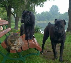 These big velvety guys are impressive looking but kitty does NOT seem impressed! lol