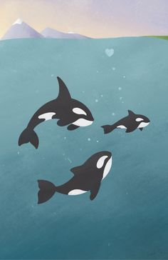 Orca Whale Family Art Print // Prints available at Society6
