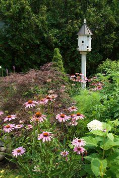 Birdhouse, purple coneflower (Echinacea purpurea), red Japanese maple, hydrangea, evergreens, trees in summer garden