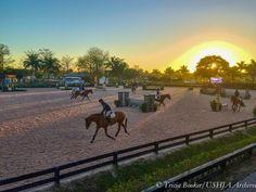 Horsealot lifestyle • Horsealot