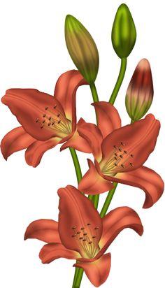 Orange Lilium Clipart