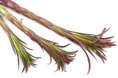 villiyrtti | Suomen Luonto Medicinal Plants, Natural Medicine, Asparagus, Natural Remedies, Herbalism, Herbs, Nature, Finland, Food