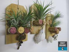 #tillandsia and cork plaques #airplants #corks