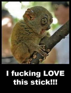 Image detail for -Cute Animal Loves Stick | Funny Jokes, Videos, Quotes and Pictures ...