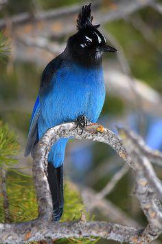 beautiful+birds - Buscar con Google