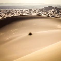 #WAVE by  Timo Keitel #Photocircle #nofilter #Morocco #Africa #dunes #Sahara #landscapephotography #desert #landscape #yellow #sun #homedecor  #Closethecircle - if you buy this #photo Timo Keitel and Photocircle #donate 10% towards assisting #refugee boats in distress on the #Mediterranean