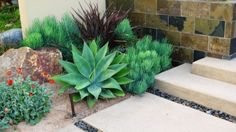 I love succulents... low maintenance plants are always welcomed in my garden!