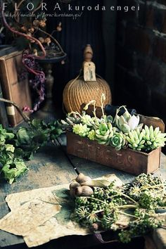 3月の園芸教室見本。。。【多肉植物の寄せ植え】  フローラのガーデニング・園芸作業日記