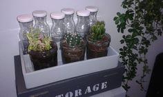 Cactusjes en flesjes