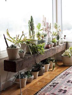 kamerplanten voor een ecologisch huis