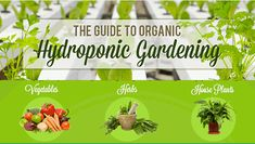 Guide to Organic Hydroponic Gardening [Infographic] - Living Green Magazine Hydroponics Store, Hydroponic Farming, Hydroponic Growing, Aquaponics System, Aquaponics Greenhouse, Hydroponic Lettuce, Indoor Aquaponics, Aquaponics Plants, Herb Garden