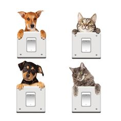 DIY Funny Cute Cat Dog Switch Stickers Wall Stickers Home Decoration Bedroom Parlor Decoration Removable Wall Stickers, Wall Stickers Home Decor, Cat Stickers, Wall Decals, Sticker Vinyl, Cartoon Stickers, Wall Art, Cartoon Live, Cartoon Dog