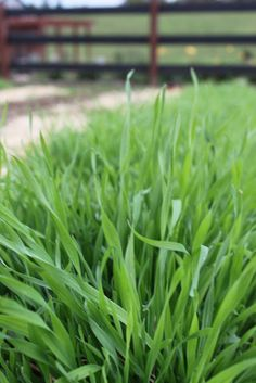 What You Need to Know About Cover Crops!