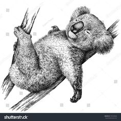 Illustration of Black and white engrave isolated Koala illustration vector art, clipart and stock vectors. Animal Drawings, Cute Drawings, Drawing Sketches, Pencil Drawings, Drawing Ideas, Coala Tattoo, Koala Illustration, Garden Illustration, Animal Art Projects