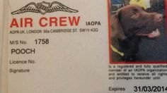 "Callie the chocolate Labrador has officially been made an ""air crew member"" by a pilots association in the UK."
