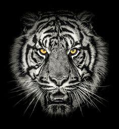 Siberian Tiger, Bengal Tiger, Tiger Tattoodesign, Herren Hand Tattoos, Tiger Tattoo Sleeve, Watercolor Lion Tattoo, Tiger Artwork, Native Tattoos, Tiger Wallpaper