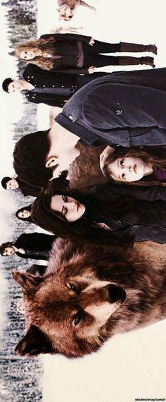 Log in Twilight Saga Twilight Film, Twilight Saga Quotes, Vampire Twilight, Twilight Saga Series, Twilight Edward, Twilight Cast, Twilight Breaking Dawn, Twilight New Moon, Twilight Jacob