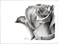 pencil-drawing-rose