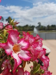 Port St Lucie Botanical Garden
