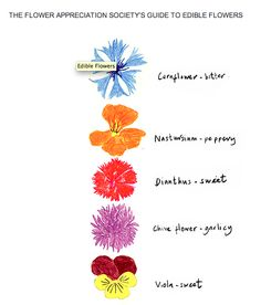 """the flower appreciation society""""s guide to edible flowers"""