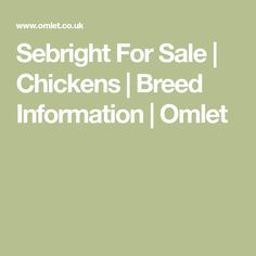 Sebright For Sale | Chickens | Breed Information | Omlet