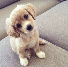 This special puppy golden retriever will brighten your day. Dogs are awesome creatures. Cute Animals Puppies, Cute Baby Animals, Animals And Pets, Cute Puppies, Dogs And Puppies, Funny Animals, Funny Dogs, Puppies Tips, Animals Images