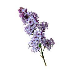 ZaSlike.com - Besplatni upload slika! ❤ liked on Polyvore featuring fillers, flowers, plants, decor и nature