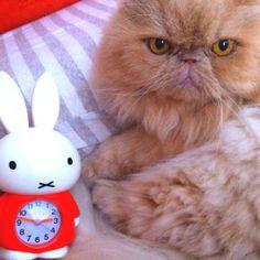 Miffy and sai lo!