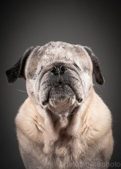 Meet Hazel. And so many other extraordinary very very very old dogs in the 'Old Faithful' dog photo collection. Hazel was microchipped five times each time she was sent to a new puppy mill until she was finally rescued.