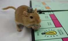 Mr. Monopoly Gerbil