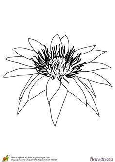 Une simple fleur de lotus, à colorier