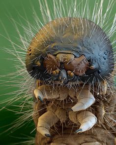 CREEPY BUGS UNDER ELECTRON MICROSCOPES